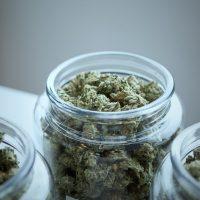 Les 6 bienfaits du Cannabis CBD pour une meilleure santé !
